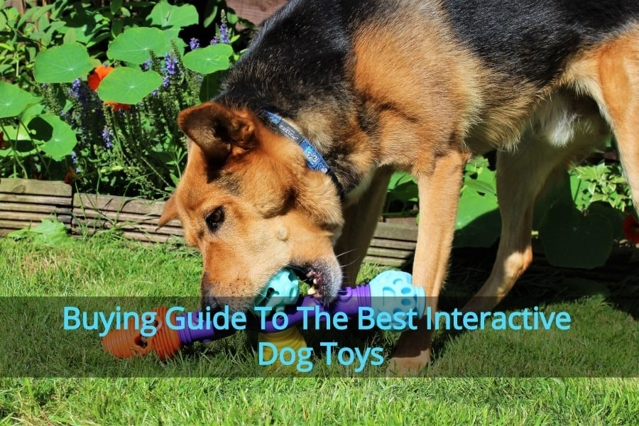 Best Dog Interactive Toys