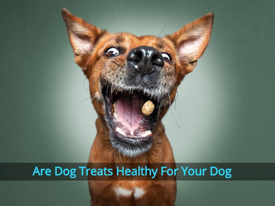 Are Dog Treats Healthy For Your Dog